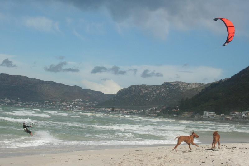 kitesurfing-muizenberg-dogs