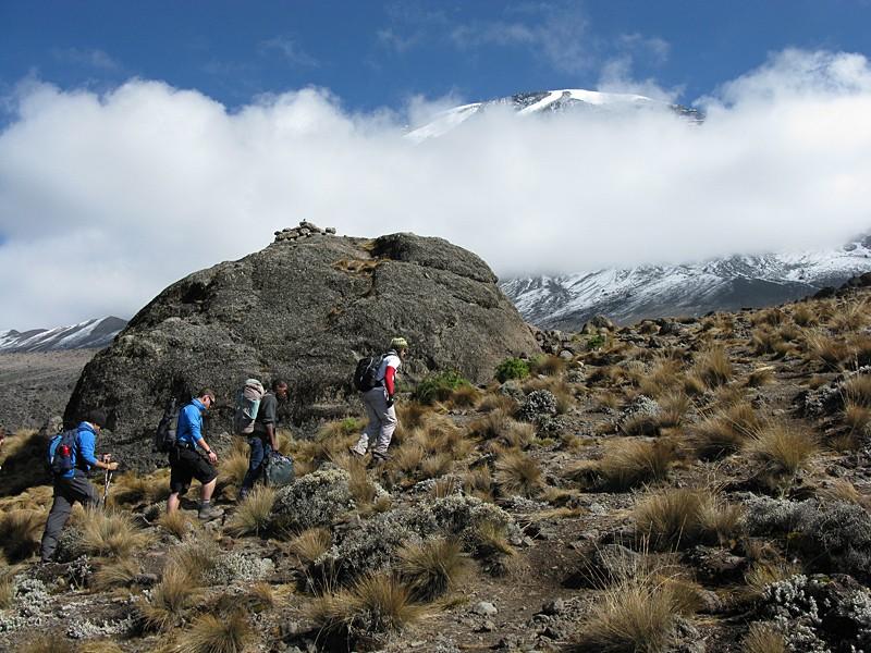 Kilimanjaro and zanzibar tour tanzania kitesurf tours for Plante zanzibar